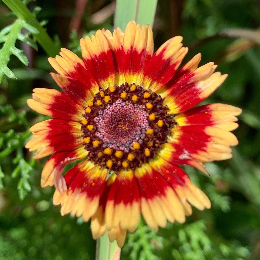 花卉日记-20_图1-4