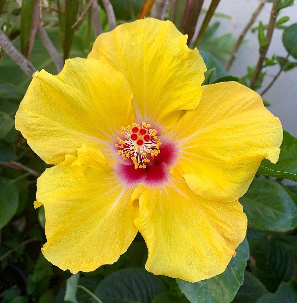 花卉日记-20_图1-10