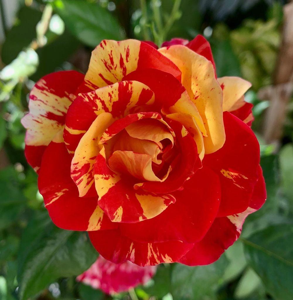 花卉日记-20_图1-11