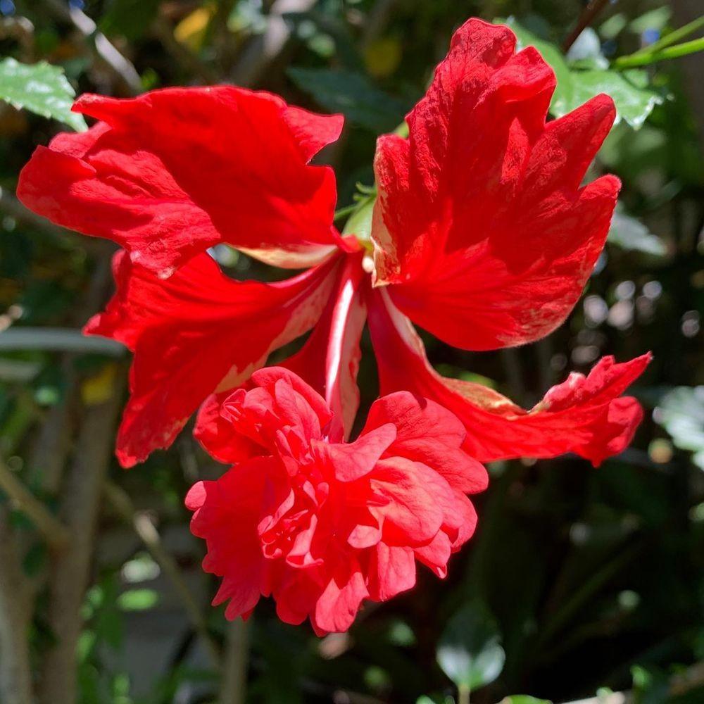 花卉日记-20_图1-12