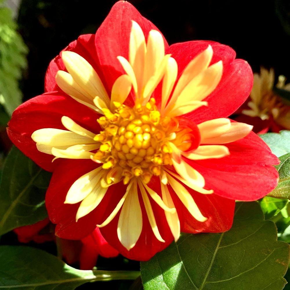 花卉日记-20_图1-13