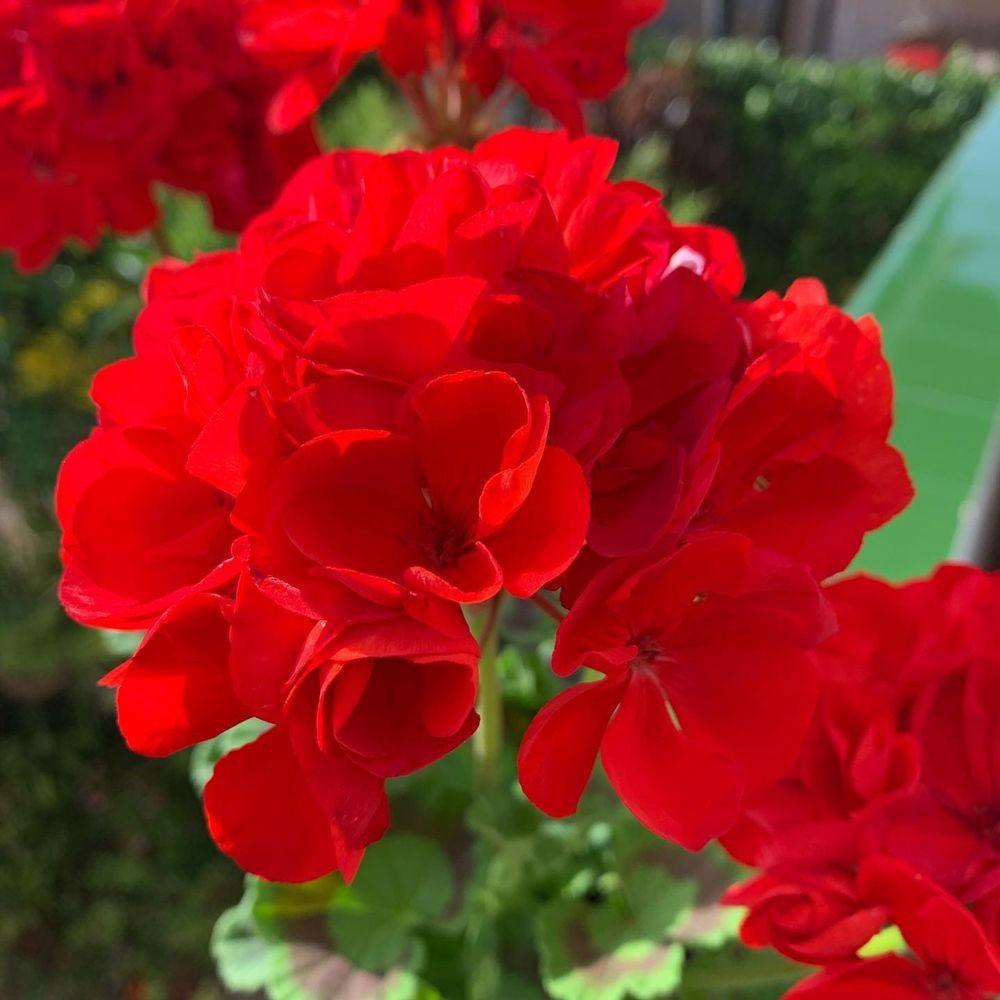 花卉日记-20_图1-14