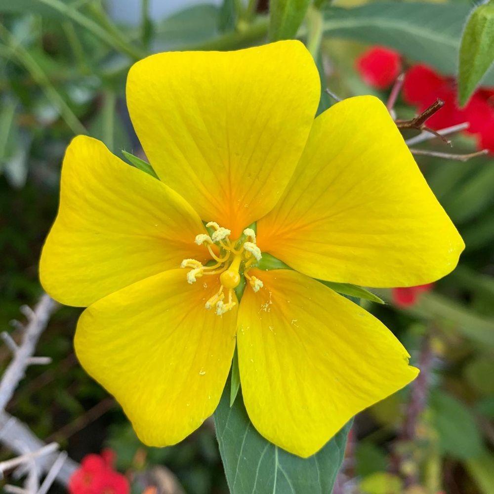 花卉日记-20_图1-15