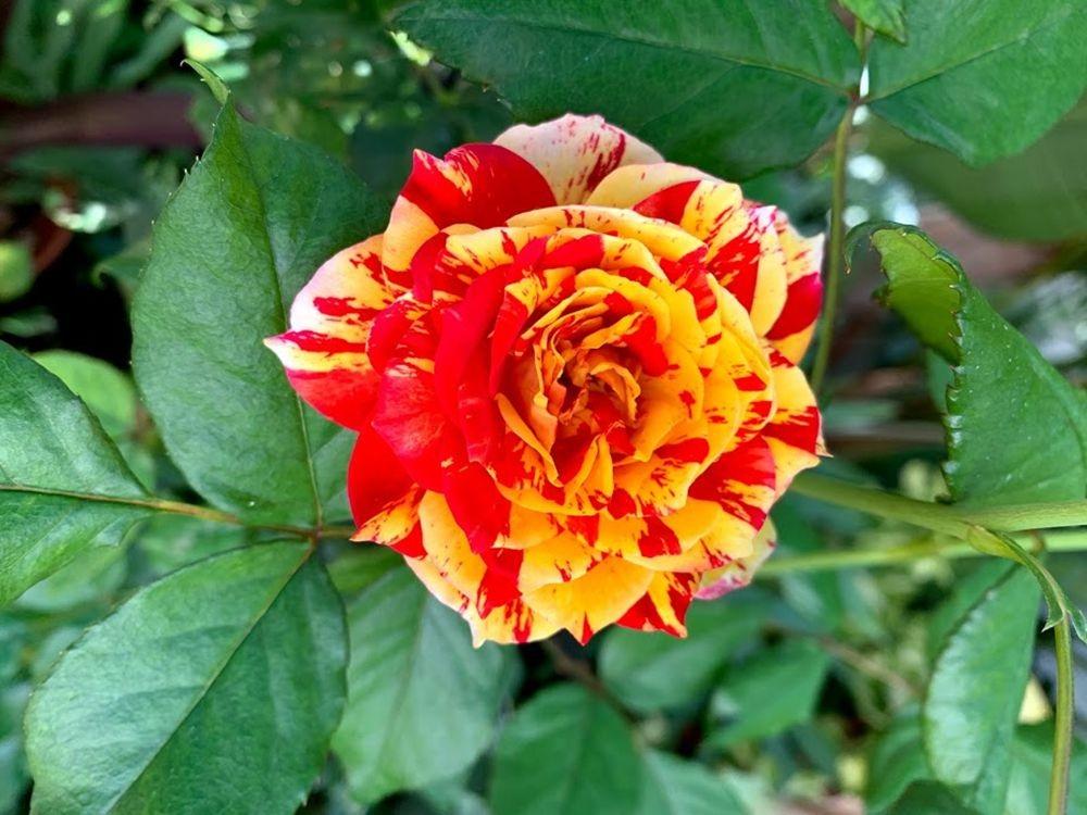 花卉日记-20_图1-22