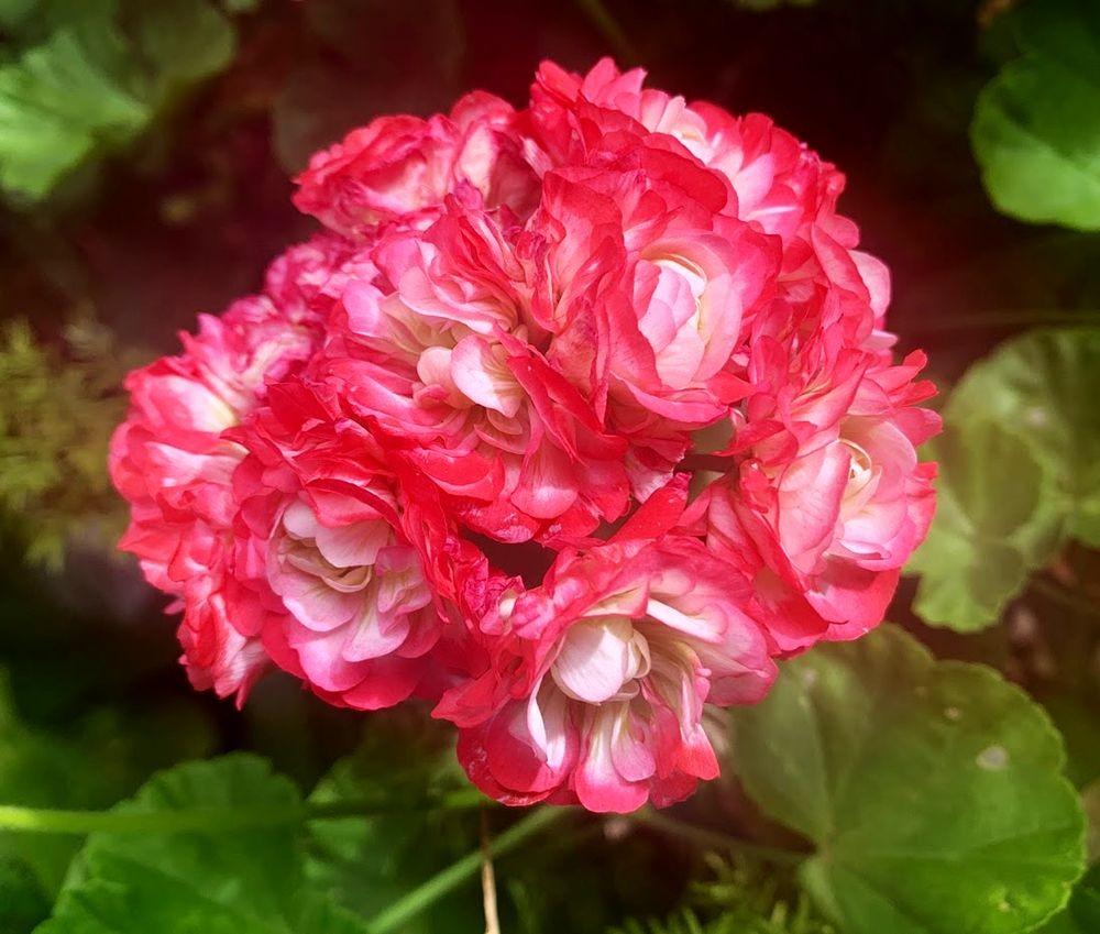 花卉日记-20_图1-23