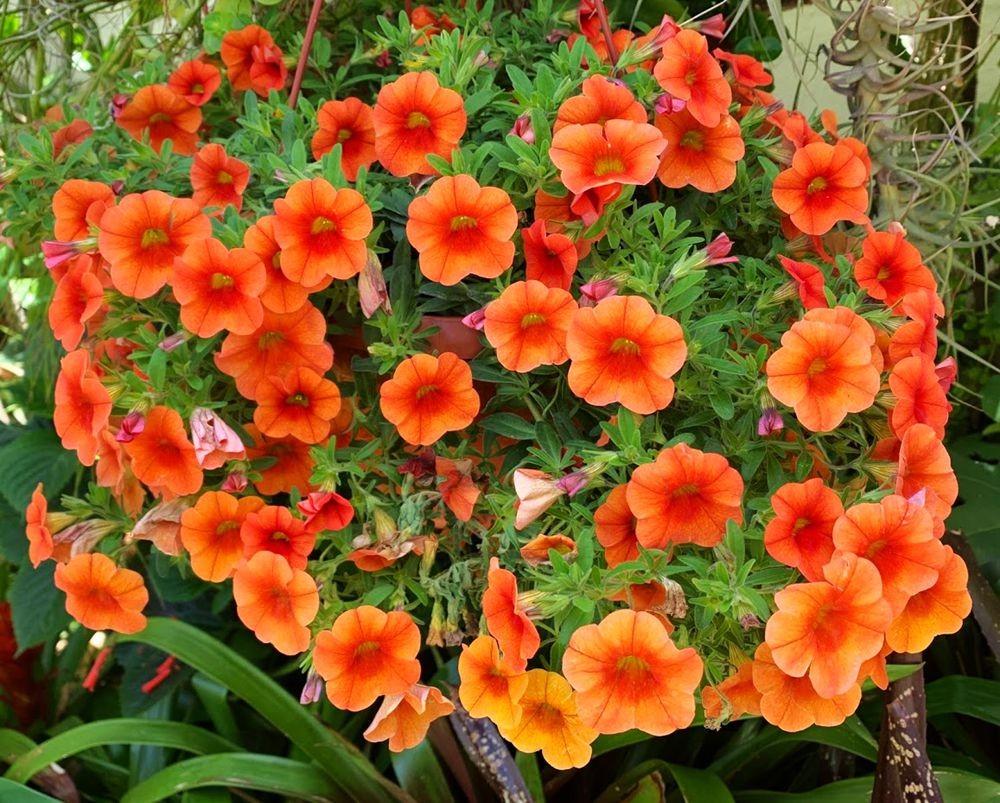 花卉日记-20_图1-26