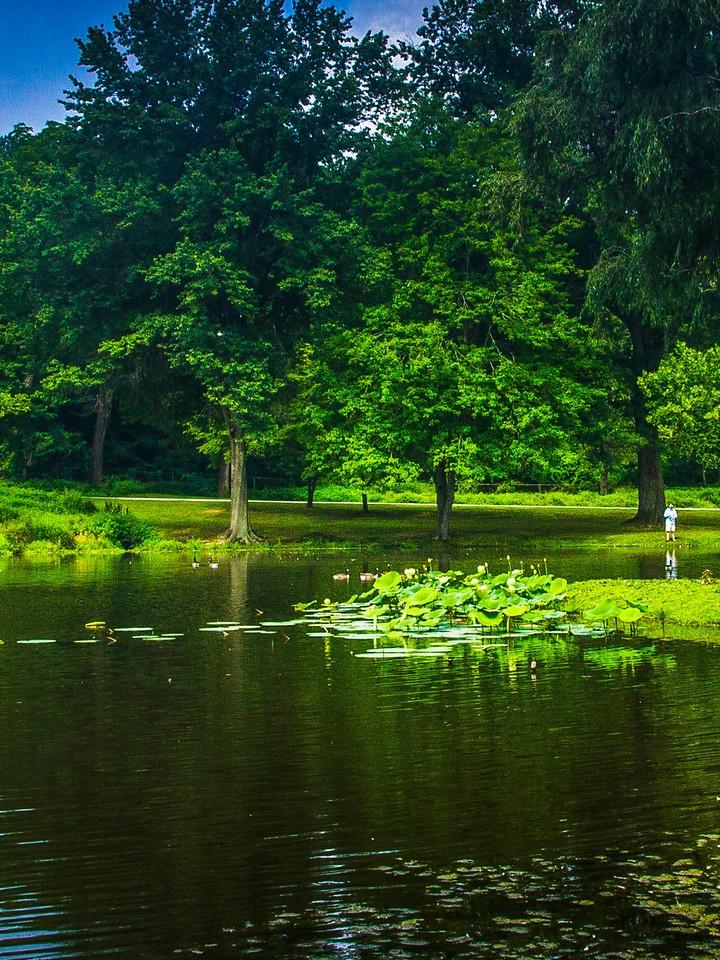 滨州Willows park,湖中喷泉_图1-2