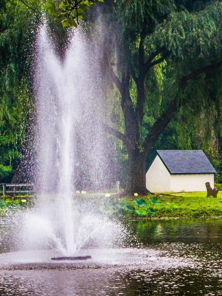 滨州Willows park,湖中喷泉_图1-3