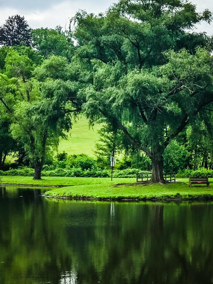 滨州Willows park,湖中喷泉_图1-16