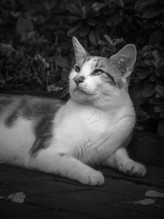 小花猫,双眼对视_图1-4