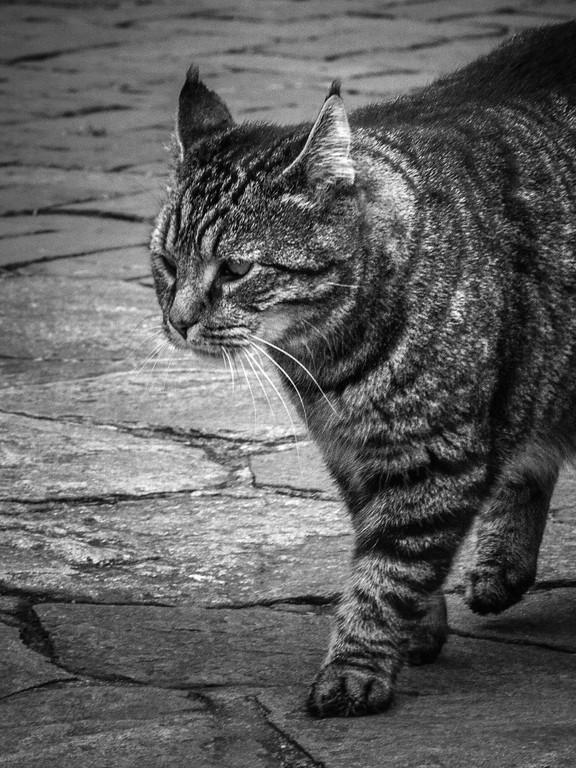 小花猫,双眼对视_图1-12