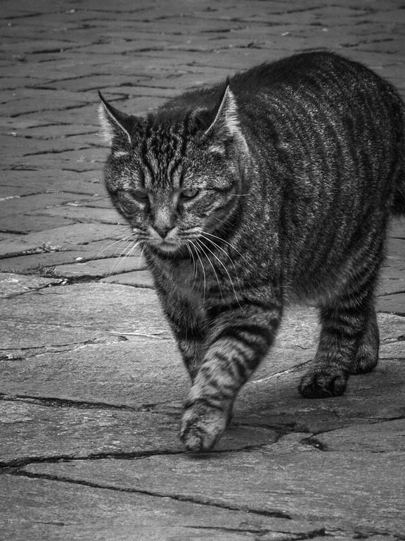 小花猫,双眼对视_图1-2