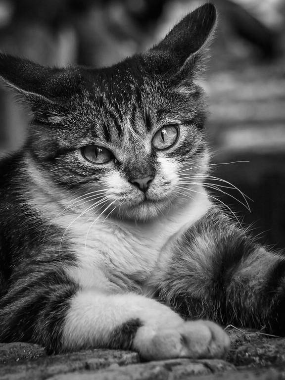 小花猫,双眼对视_图1-8