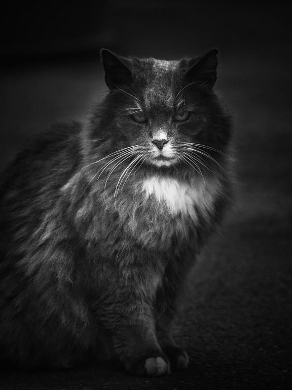 小花猫,双眼对视_图1-1