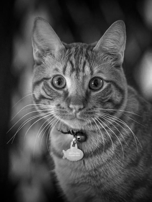 小花猫,双眼对视_图1-7