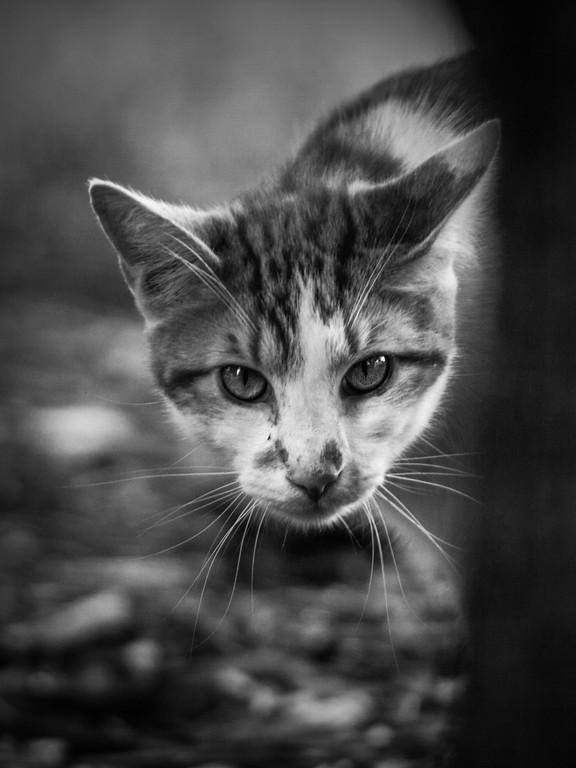 小花猫,双眼对视_图1-3