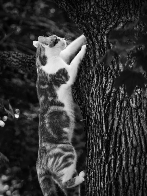小花猫,双眼对视_图1-5