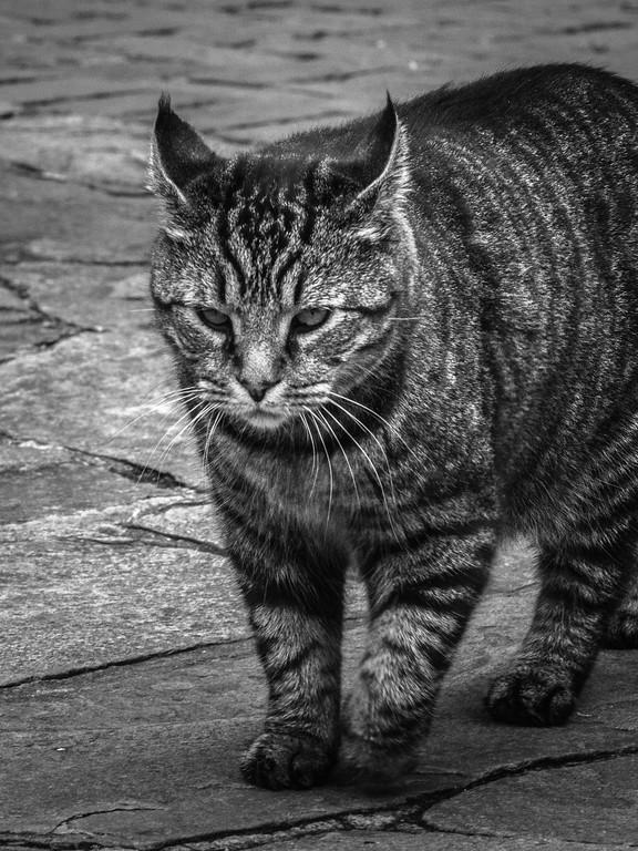 小花猫,双眼对视_图1-9