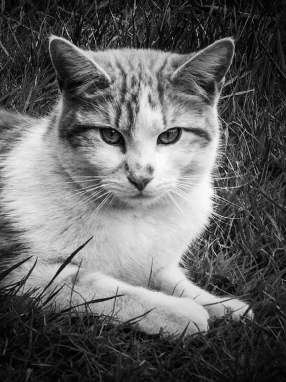 小花猫,双眼对视_图1-11