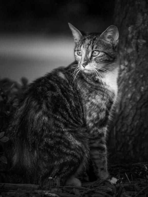 小花猫,双眼对视_图1-10