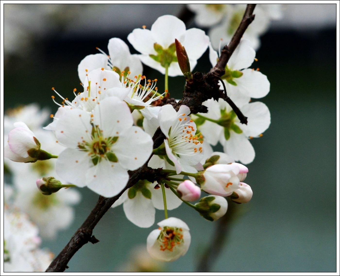 春分日小雨(七律)_图1-2