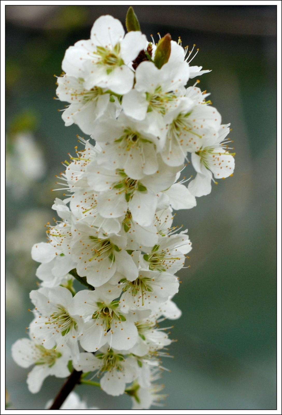 春分日小雨(七律)_图1-3
