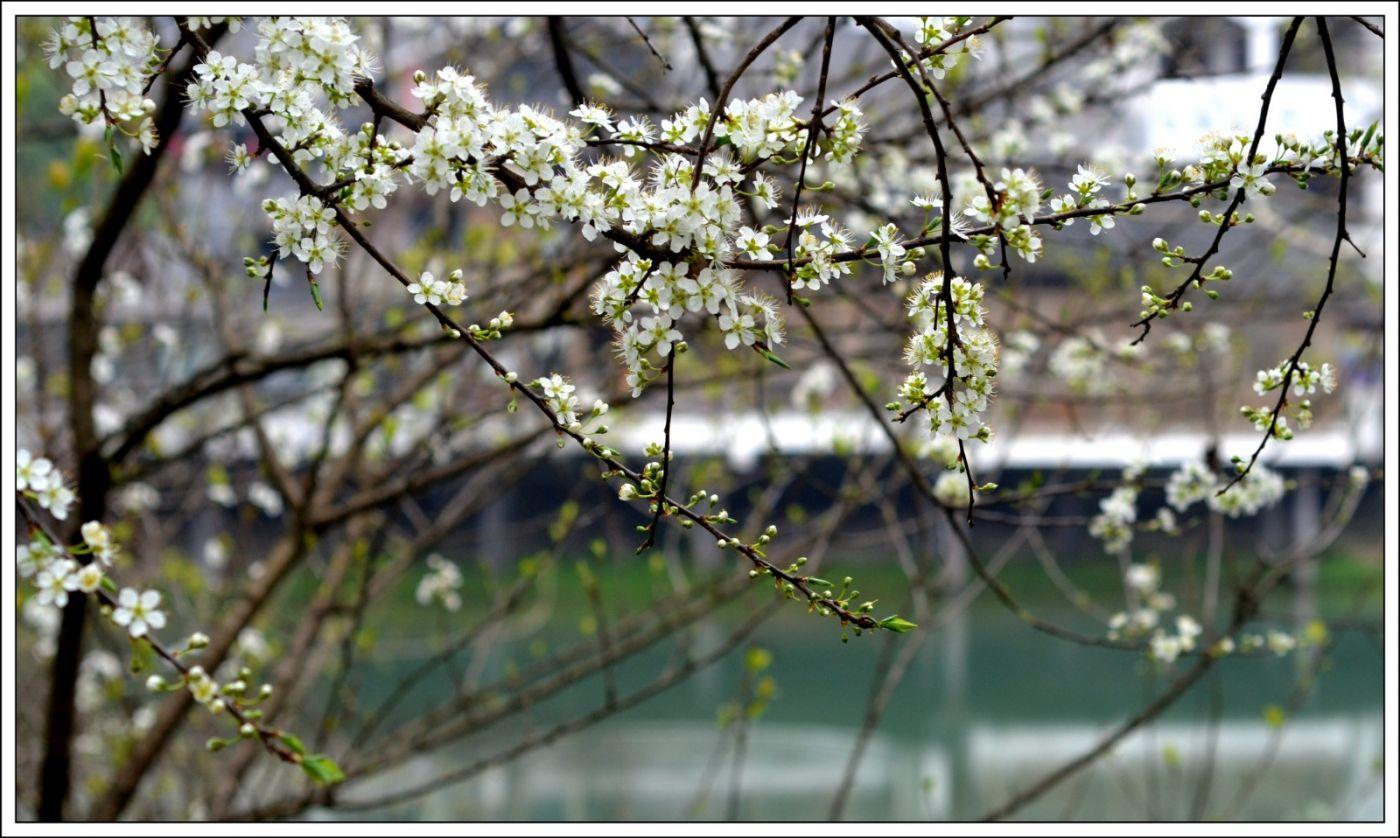 春分日小雨(七律)_图1-4
