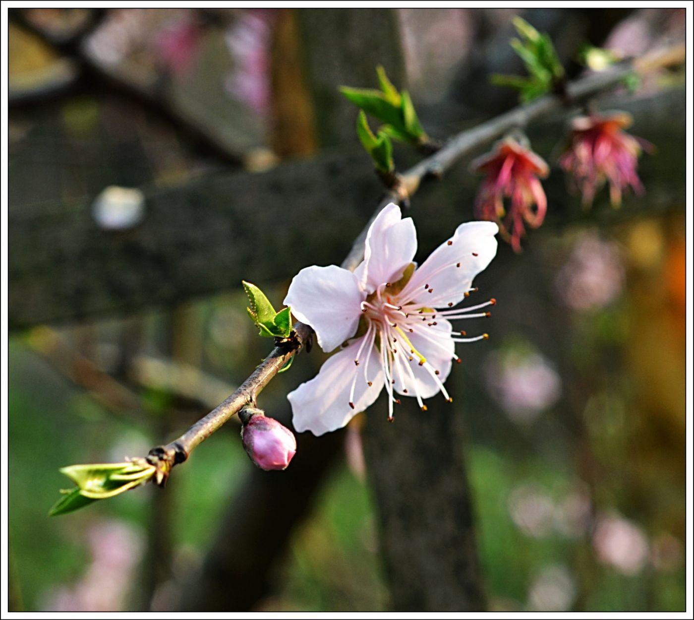 春分日小雨(七律)_图1-1