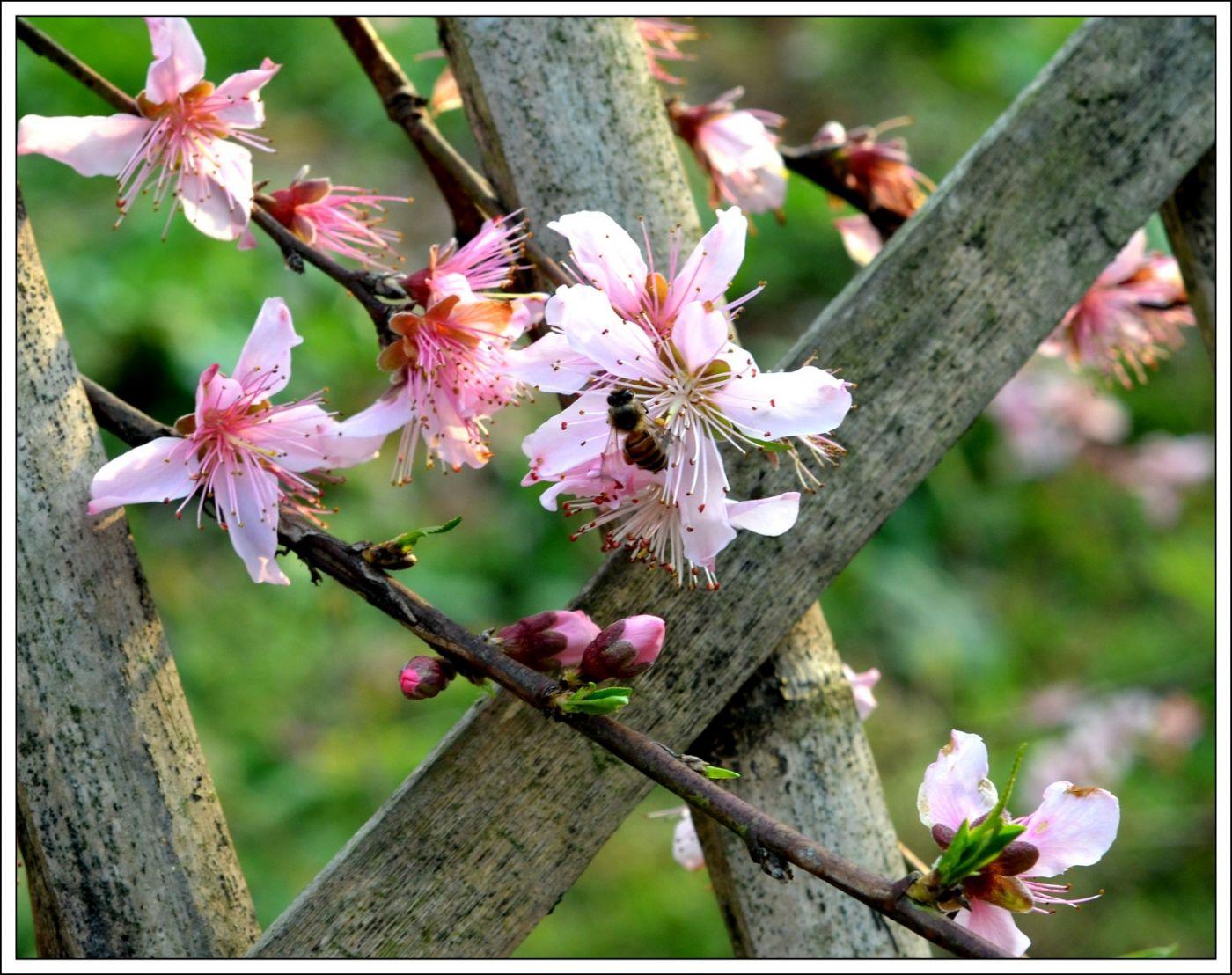 春分日小雨(七律)_图1-10