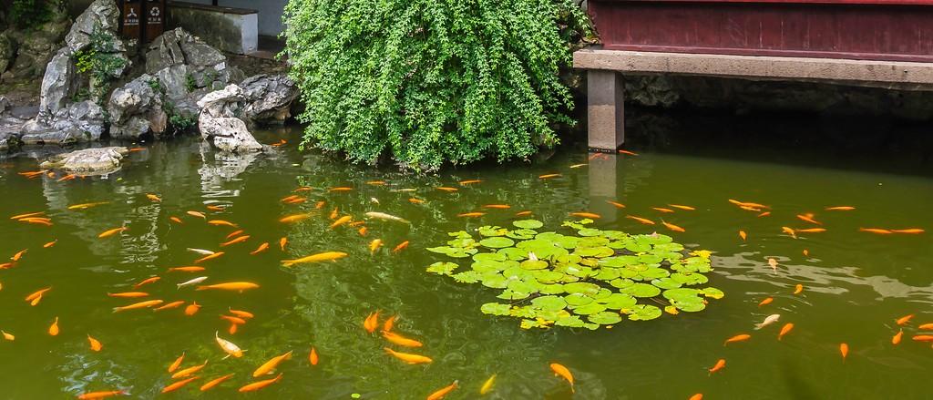 中国江苏同里,庭院美景_图1-9