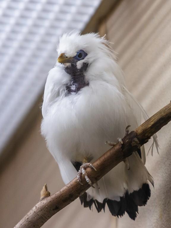 打鸟,是大鸟_图1-13