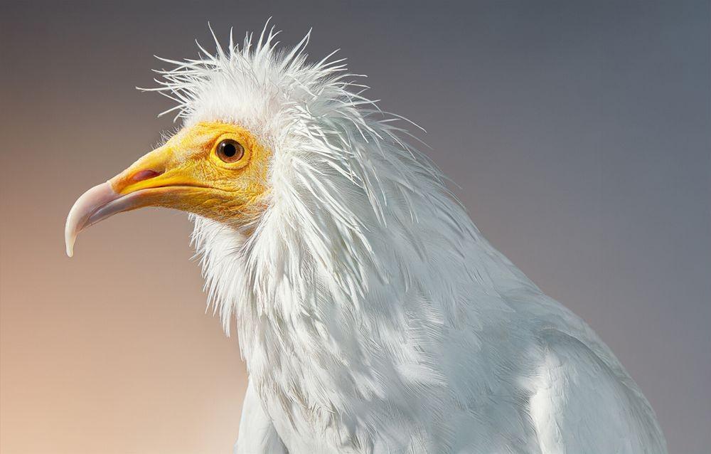 蒂姆.弗拉奇对鸟类的大胆精妙拍摄_图1-5
