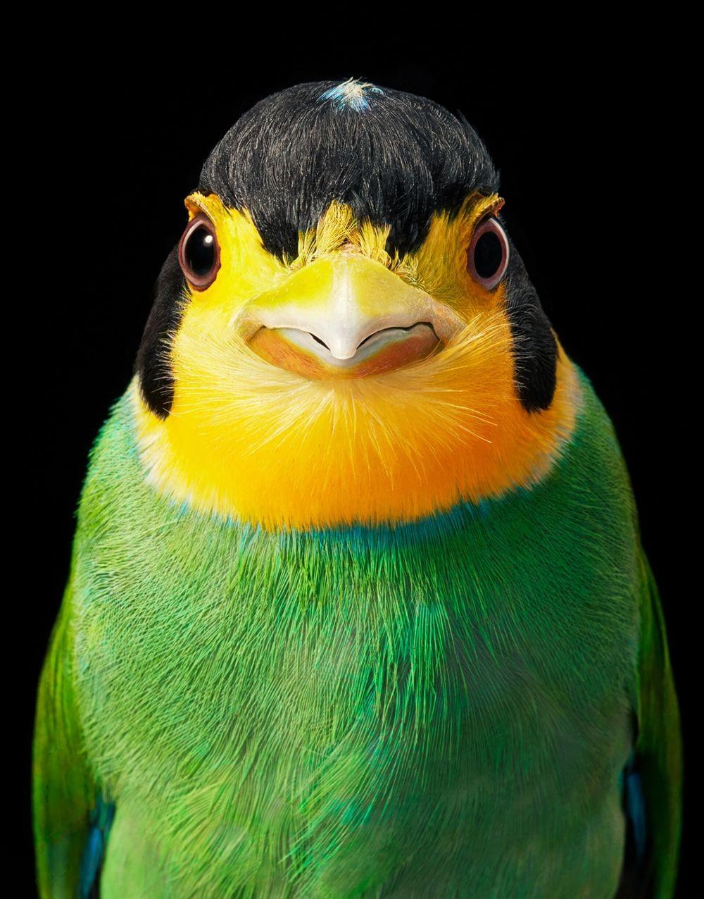蒂姆.弗拉奇对鸟类的大胆精妙拍摄_图1-6