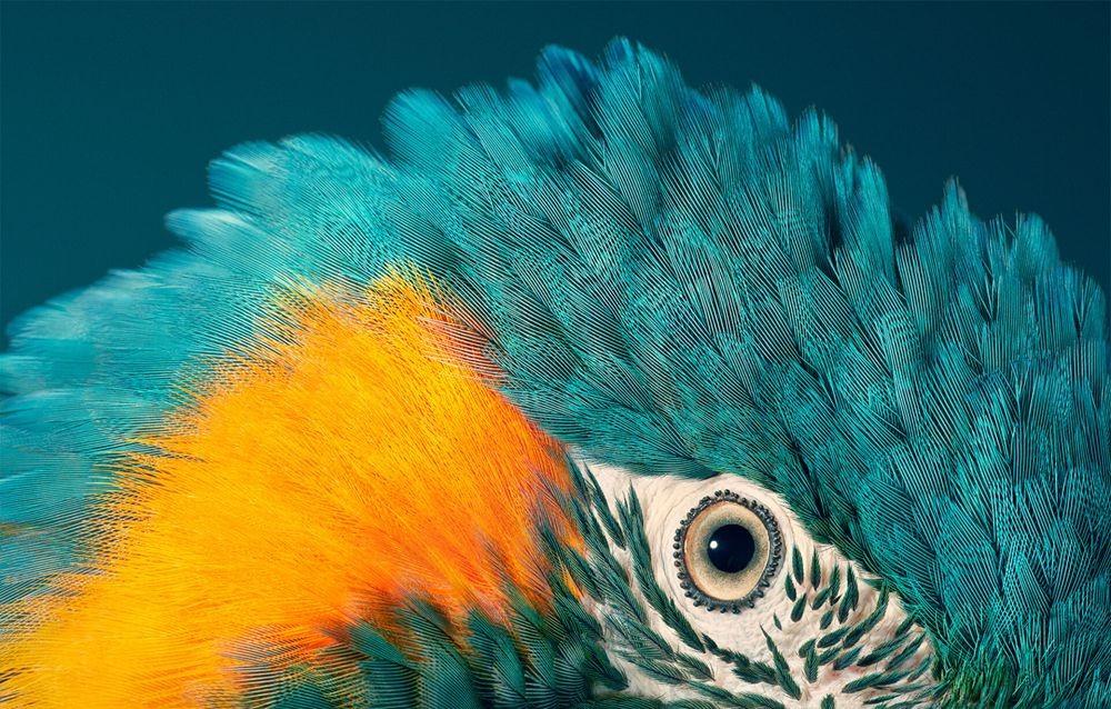 蒂姆.弗拉奇对鸟类的大胆精妙拍摄_图1-7