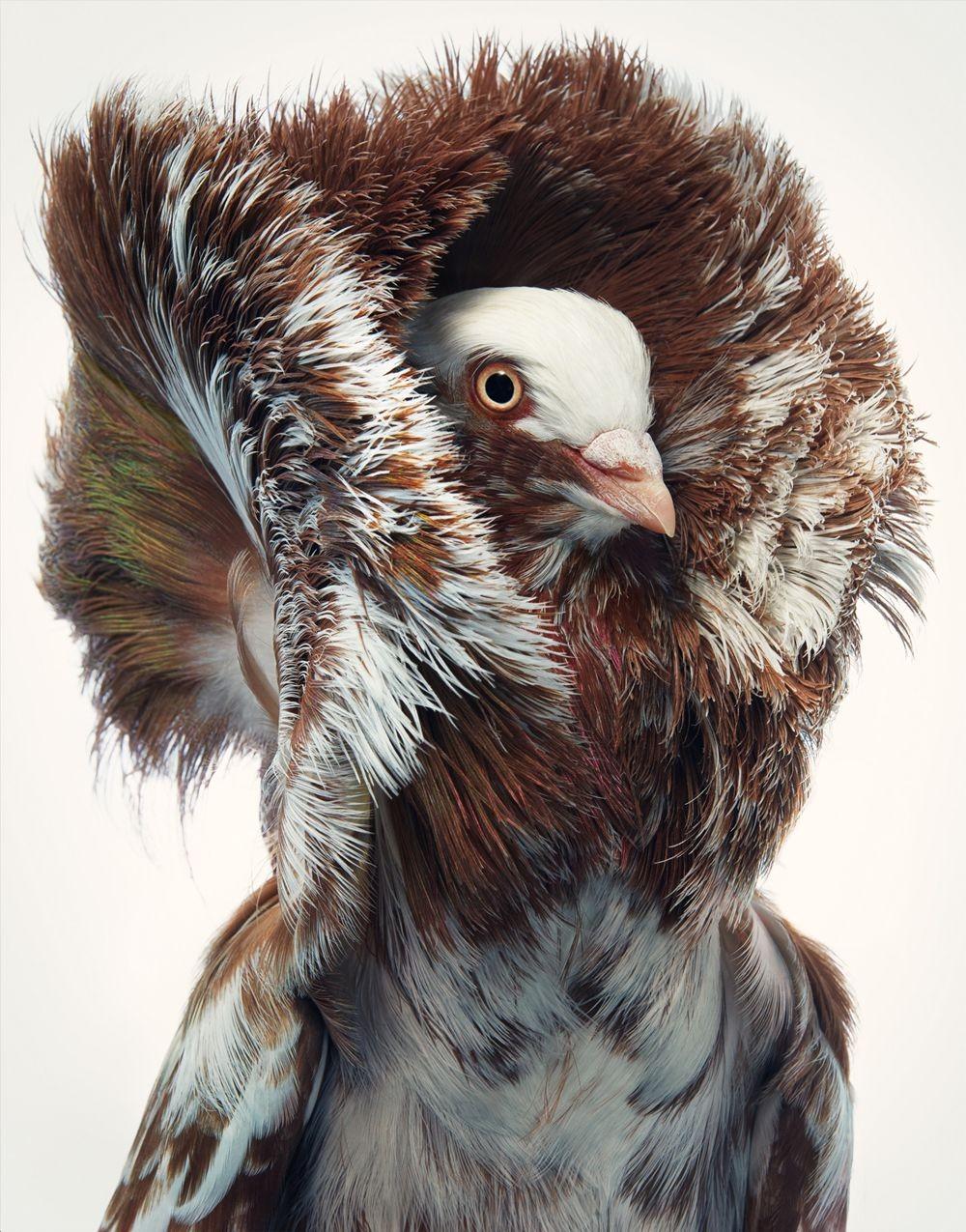 蒂姆.弗拉奇对鸟类的大胆精妙拍摄_图1-8
