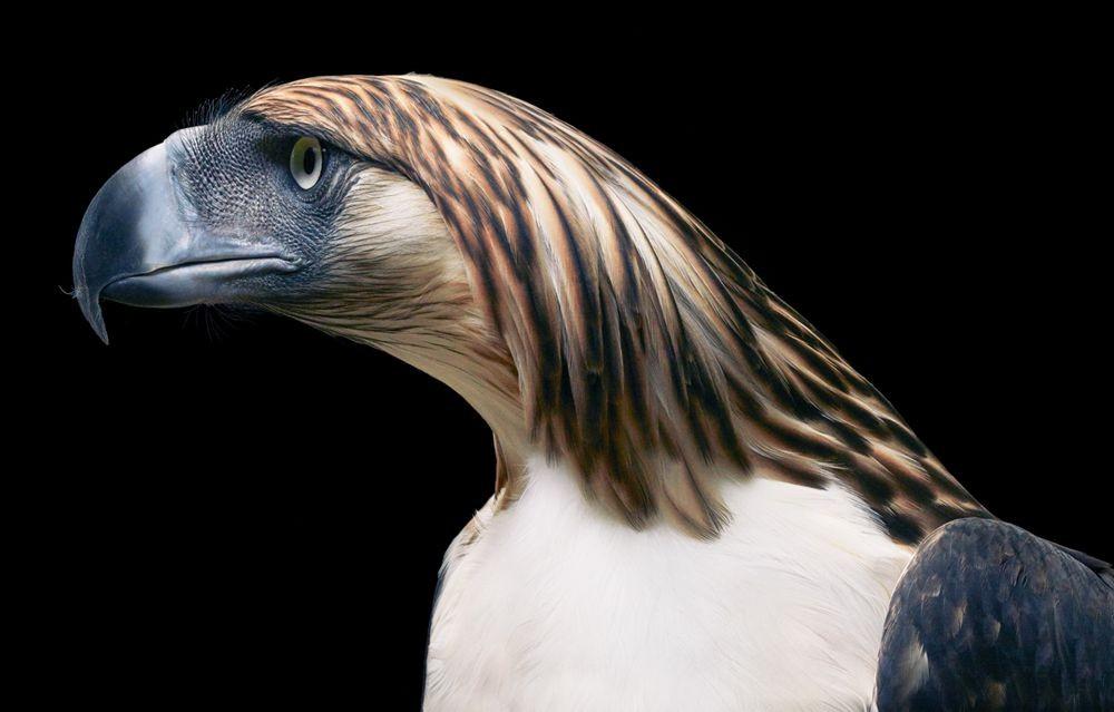蒂姆.弗拉奇对鸟类的大胆精妙拍摄_图1-11