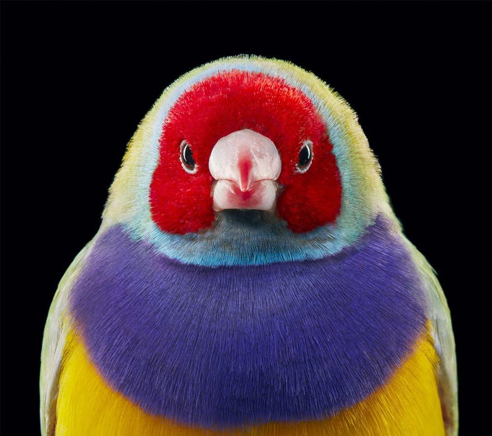 蒂姆.弗拉奇对鸟类的大胆精妙拍摄_图1-12