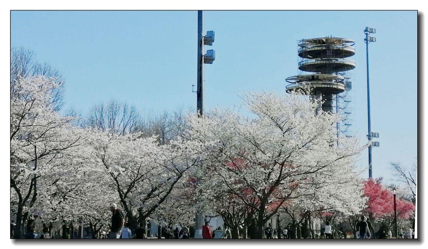 春满可乐娜公园_图1-5