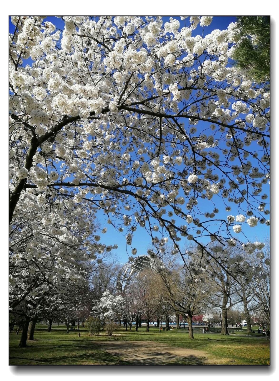 春满可乐娜公园_图1-6