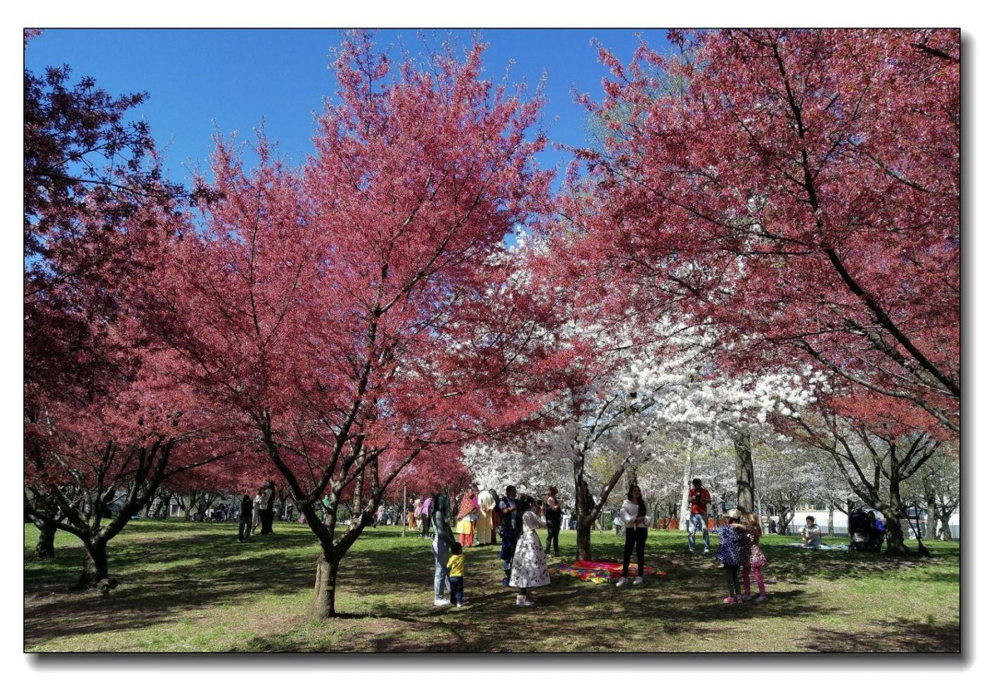 春满可乐娜公园_图1-8