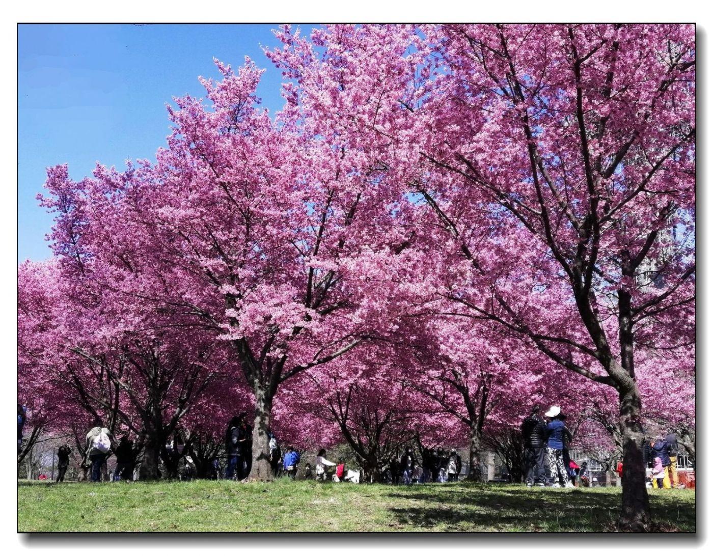 春满可乐娜公园_图1-11