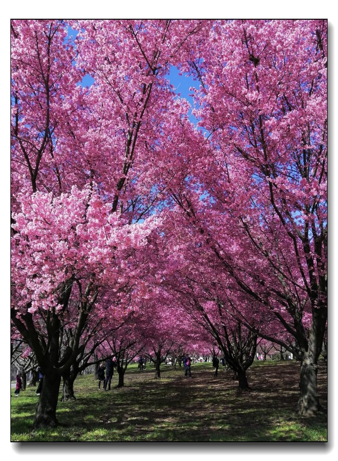 春满可乐娜公园_图1-12