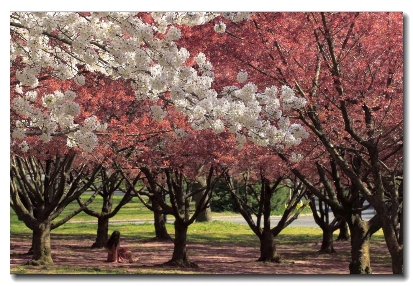 春满可乐娜公园_图1-14