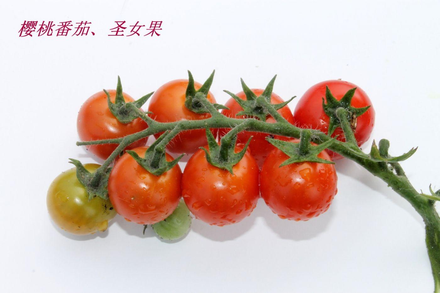 花草图谱 (34)_图1-4