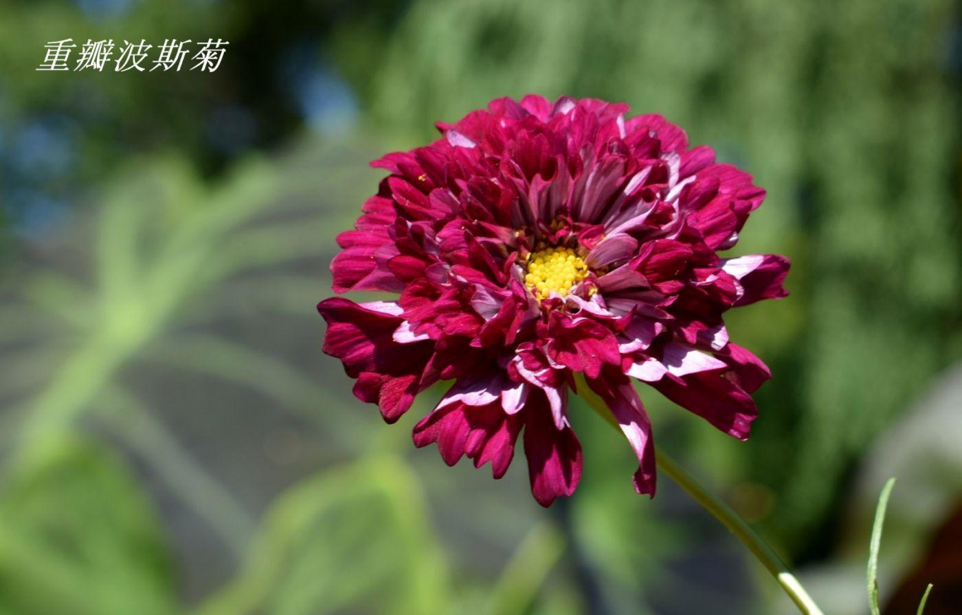 花草图谱 (34)_图1-22