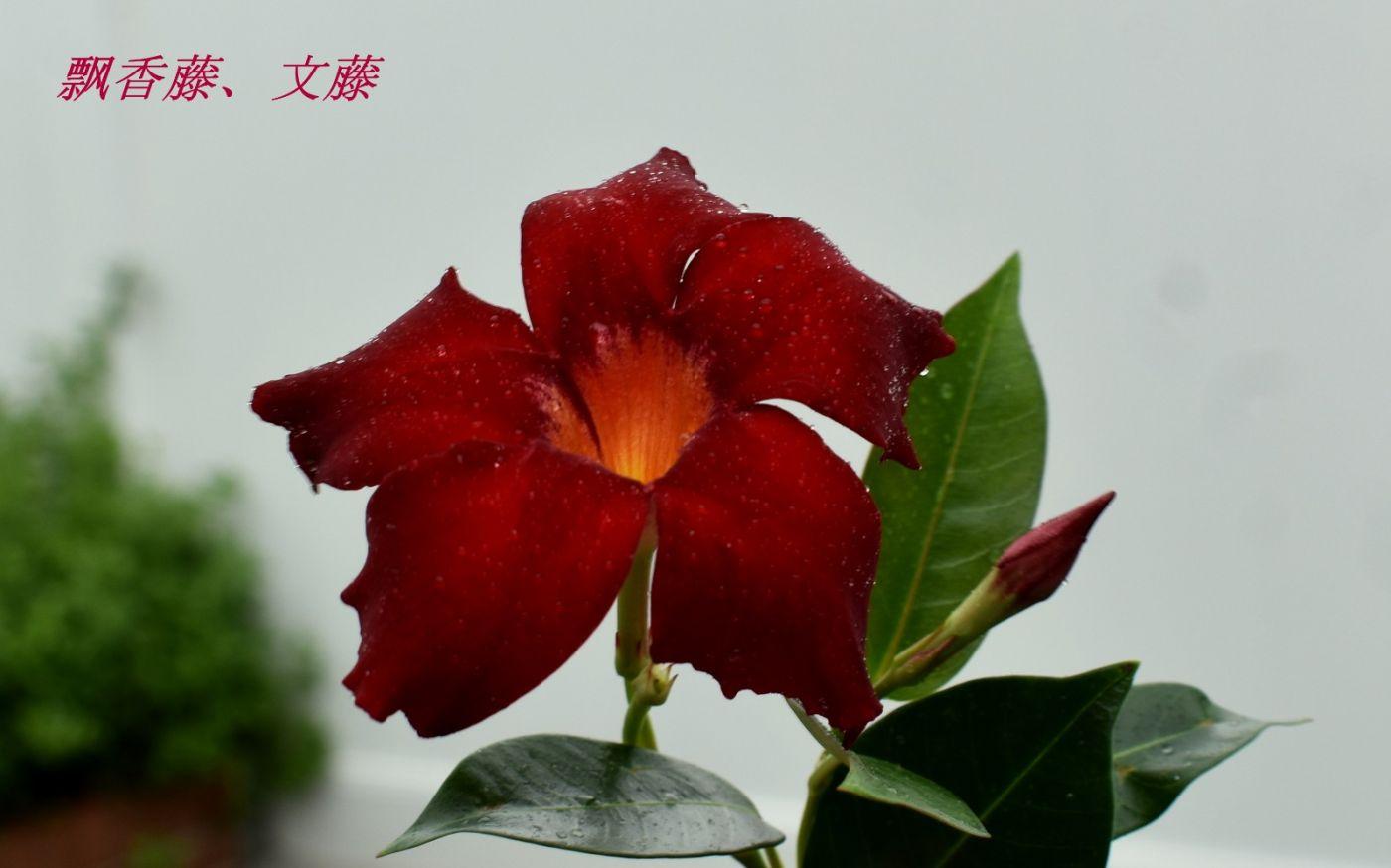 花草图谱 (34)_图1-23