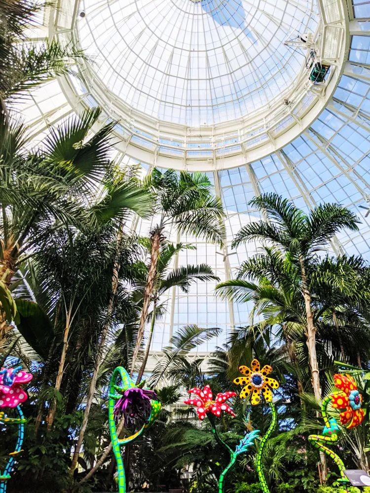 """""""宇宙自然""""在纽约植物园_图1-5"""