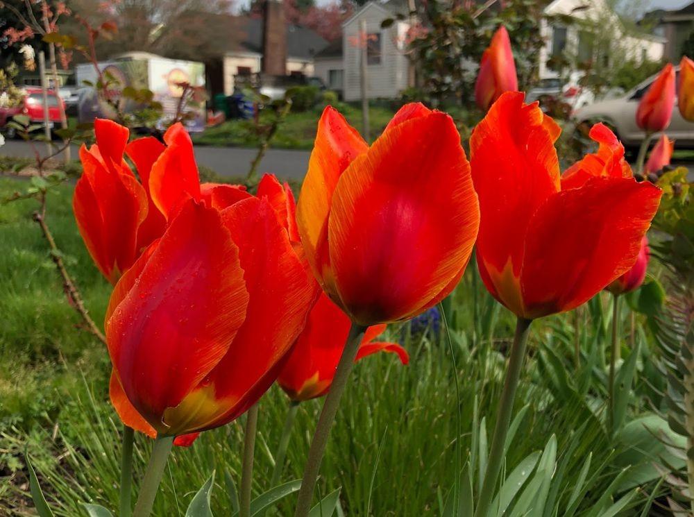 花卉日记之23_图1-1