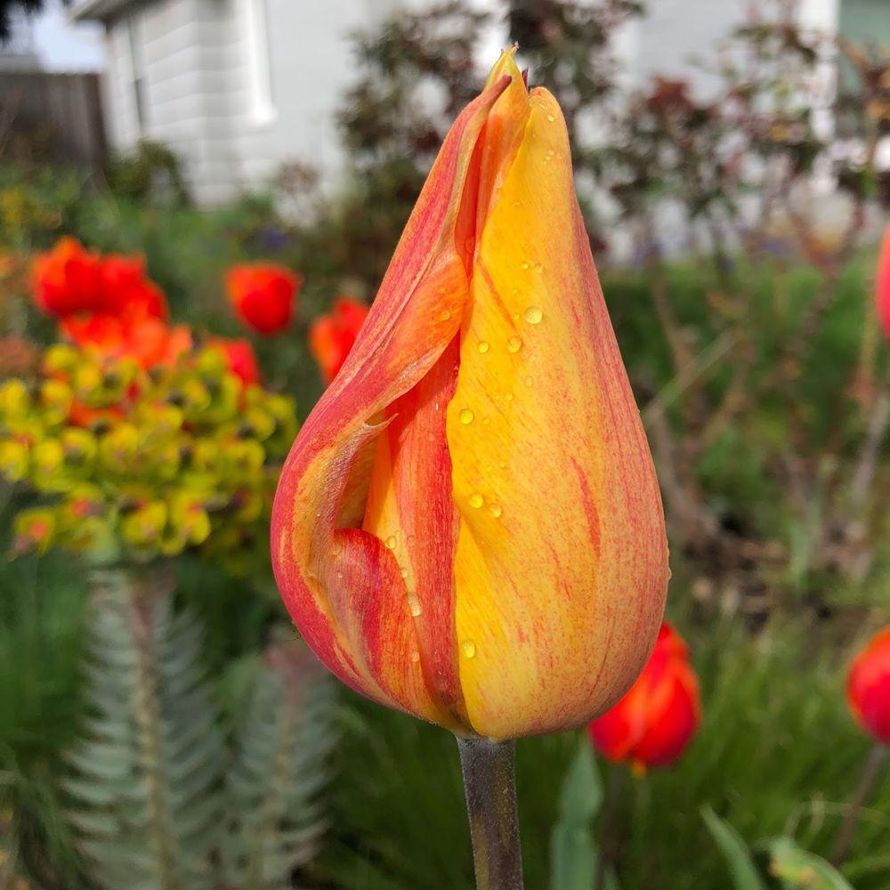 花卉日记之23_图1-3