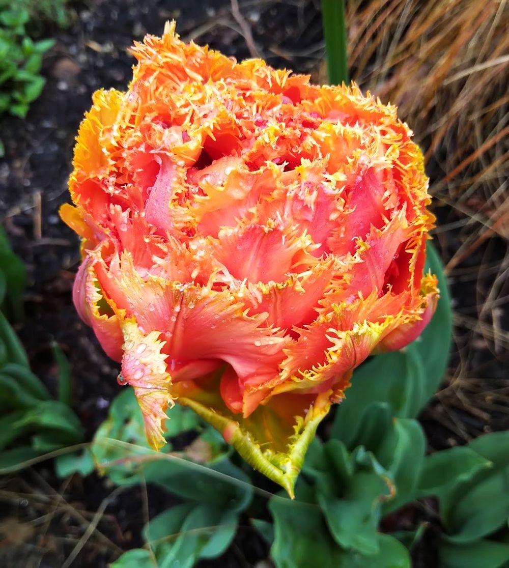 花卉日记之23_图1-4